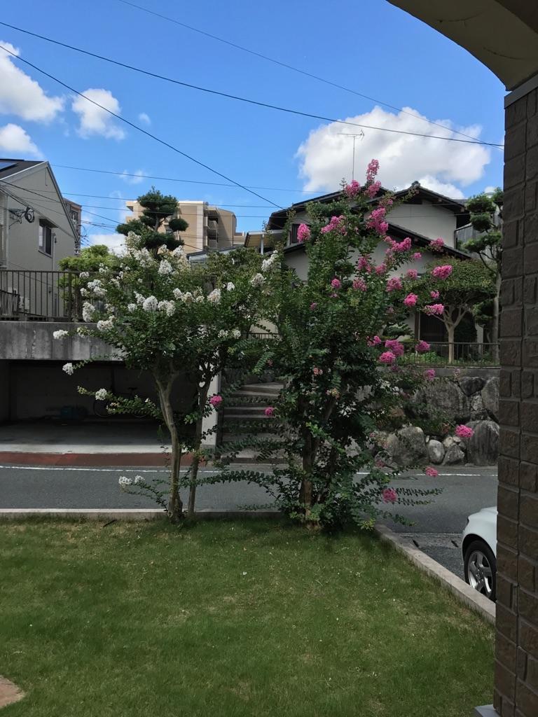 シン・セシアのシンボル「サルスベリの花」