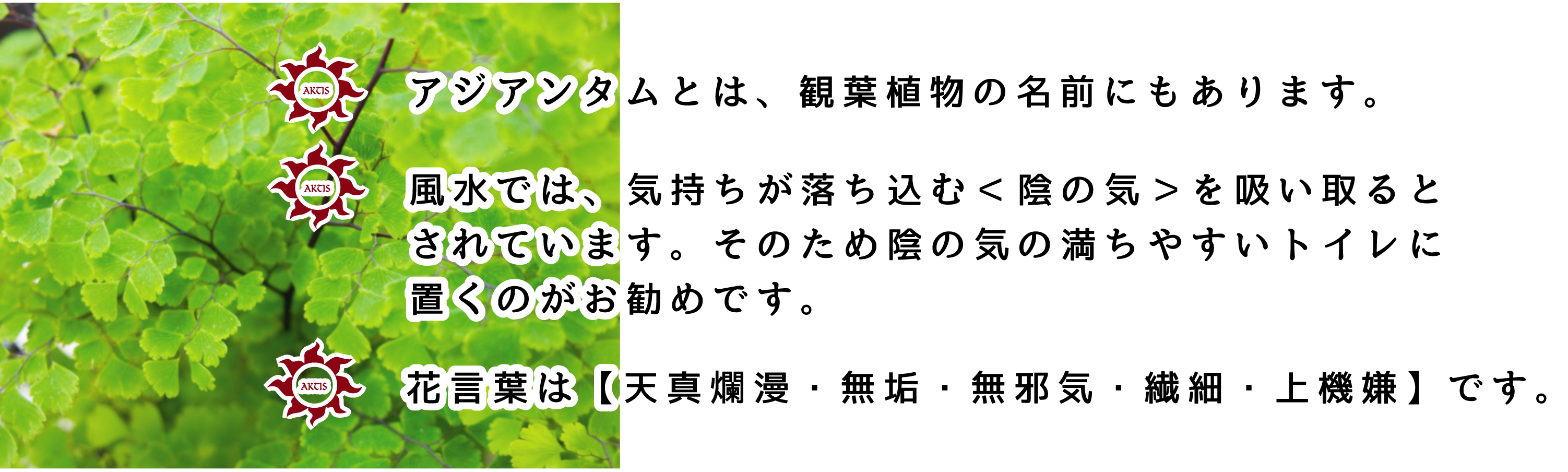 デリケートゾーン専用ローションASIANTUM(アジアンタム)