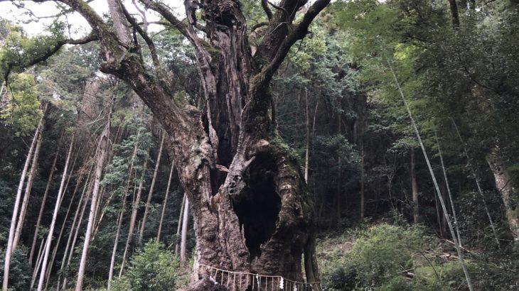 御神木に初対面(シン・セシア)