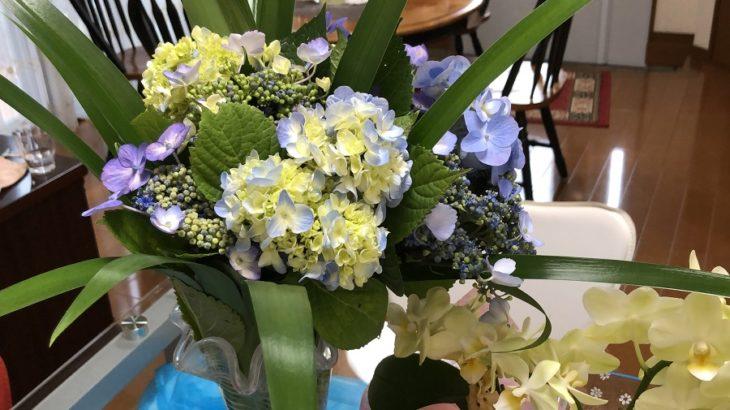 紫陽花が綺麗に咲く季節(シン・セシア)