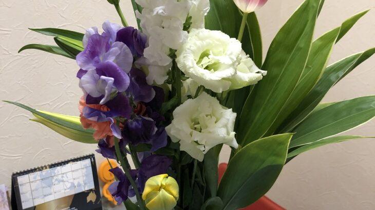素敵な花に巡り合いました(シン・セシア)