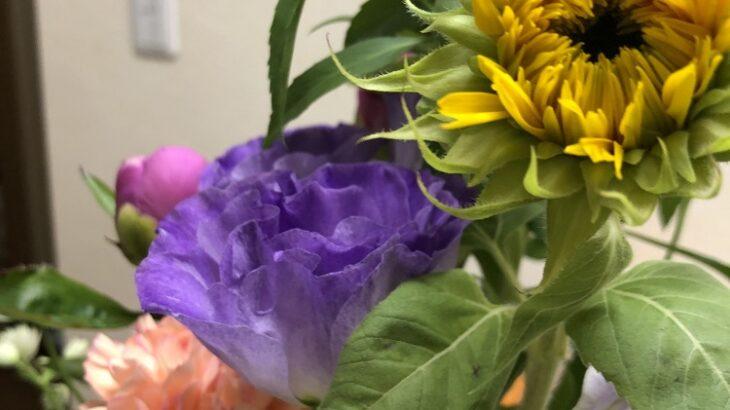 向日葵が綺麗に咲く季節(シン・セシア)